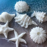 Shell Soap, Soap Seashells, Set of 7, Ocean Beach Soap, Novelty Soap, Custom Scent & Color