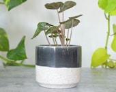 The Blaine Ceramic Plant Pot Black and White Succulent Cacti Indoor Planter Small