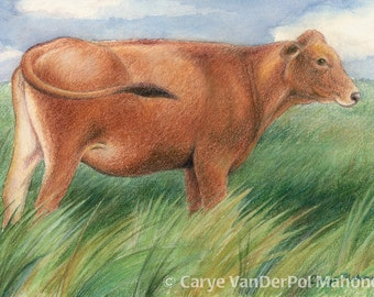 """Brown cow standing in a pasture of tall green grass pasture blowing in the wind, farm animal - ACEO Art Reproduction (Print) - """"Prairie"""""""