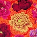 Lucinda Bunting reviewed Brocade Peony Wine PWPJ062, Kaffe Fassett Collective, Philip Jacobs, Free Spirit, Quilt Fabric, Floral Fabric, Quilting, Fabric By the Yard