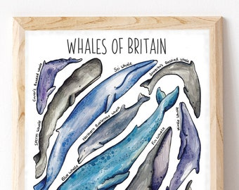 Whales of Britain Print, Whale poster, Whale collection, Whales Type Chart, Nursery Print, Wildlife Print, Whale Illustration PRWC-WHALES