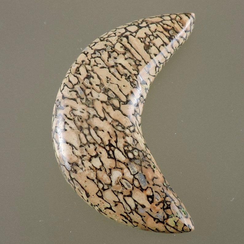 Fossil Dinosaur Bone Cabochon Golden Dinosaur Bone Cab image 0