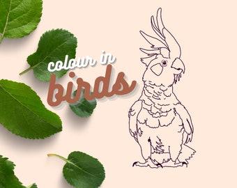 Colour in birds