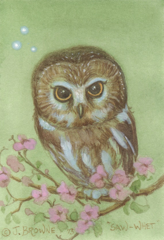Saw Whet Owl 5x7 Signed Print