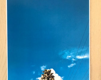 Palm Tree in Los Angeles Photo Wall Print