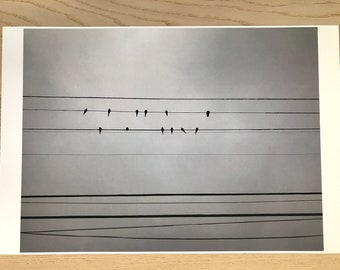 Birds on a Wire Photo Wall Print