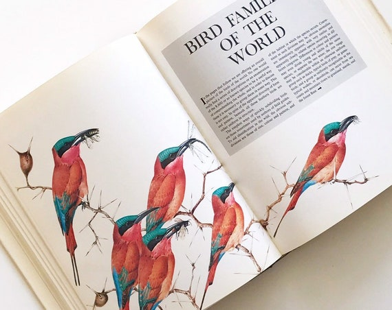 readers digest birds coffee table book | hardcover | illustrated bird plates | gift for birdlover