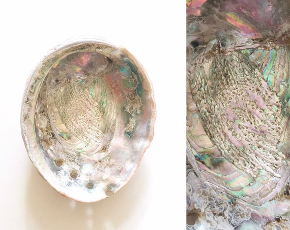 real natural abalone shell | seashell beach house decor | one shell