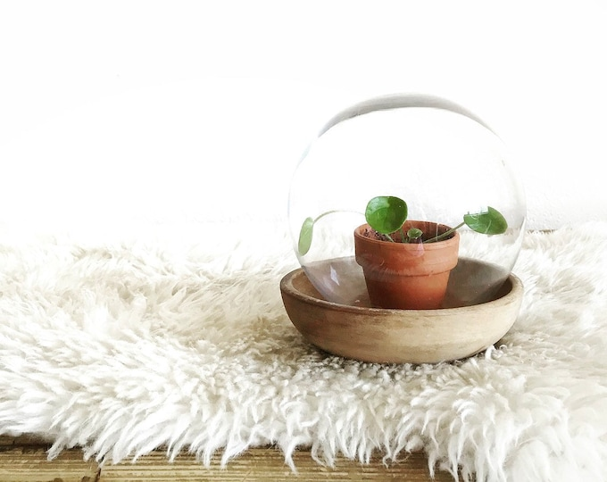 repurposed rustic glass ball cloche with wooden base / salvaged