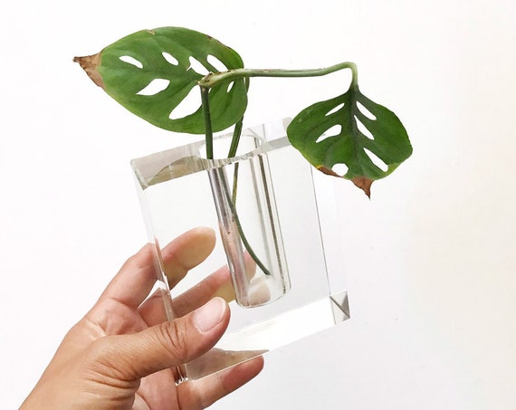 heavy modern glass propagation vase | bud starter flower vase | gift for gardener
