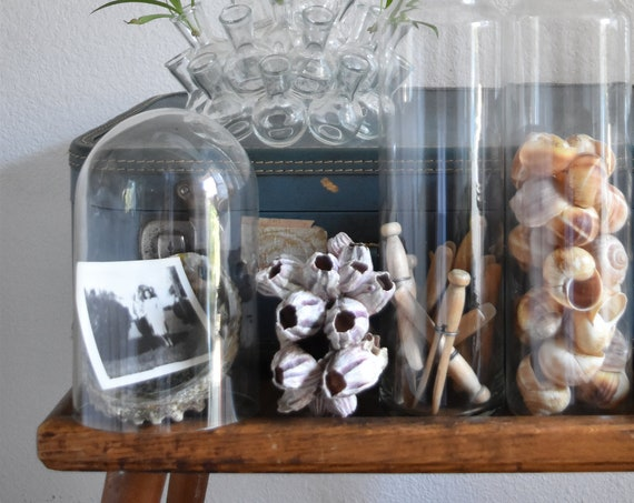 rustic glass dome specimen display / curio storage / terrarium