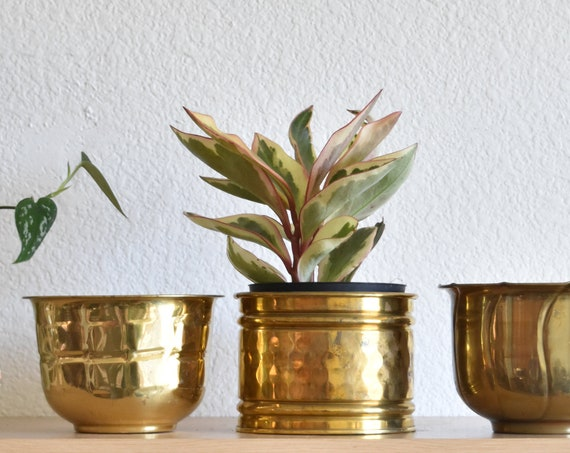 set of 3 small brass hollywood regency planters / flower pots