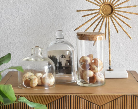 beachhouse cork lid glass apothecary jar / cylinder kitchen storage terrarium / 1 jar