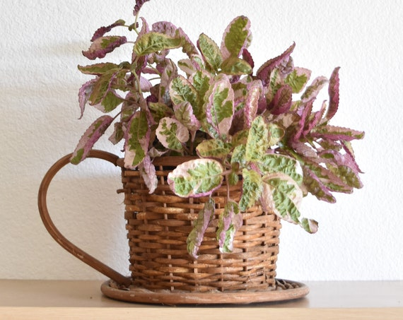 woven wicker teacup basket planter with handle / flower pot planter