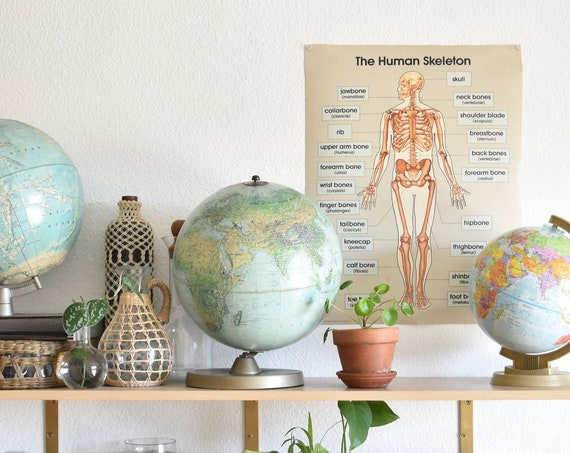 1980s human body skeletal chart poster size / anatomical / medical school wall hanging print