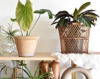 woven rattan basket planter / boho