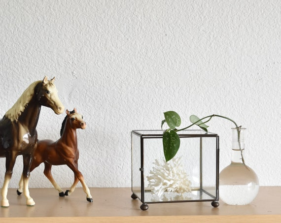 vintage glass display curio box / specimen apothecary jar