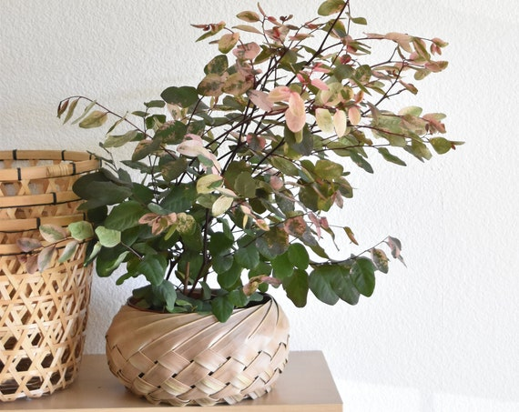 woven banana leaf wall hanging basket / flower pot planter