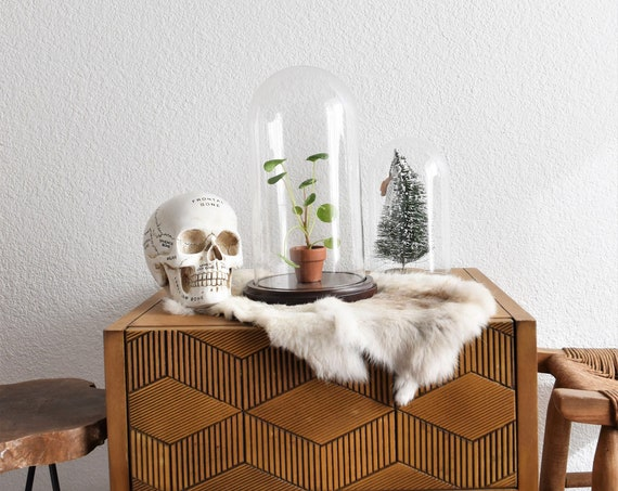 tall rustic glass dome specimen display with wood base / curio storage / terrarium