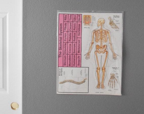 1980s skeletal system chart poster size / skeleton / anatomical / medical / school