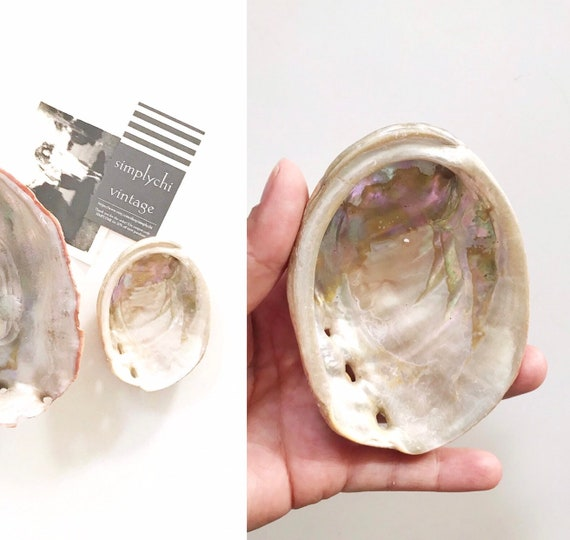 small real natural abalone shell | seashell beach house decor | one shell