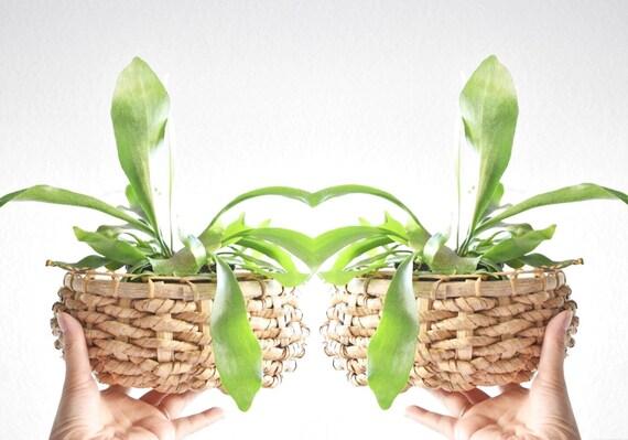 woven wicker orb bowl basket planter