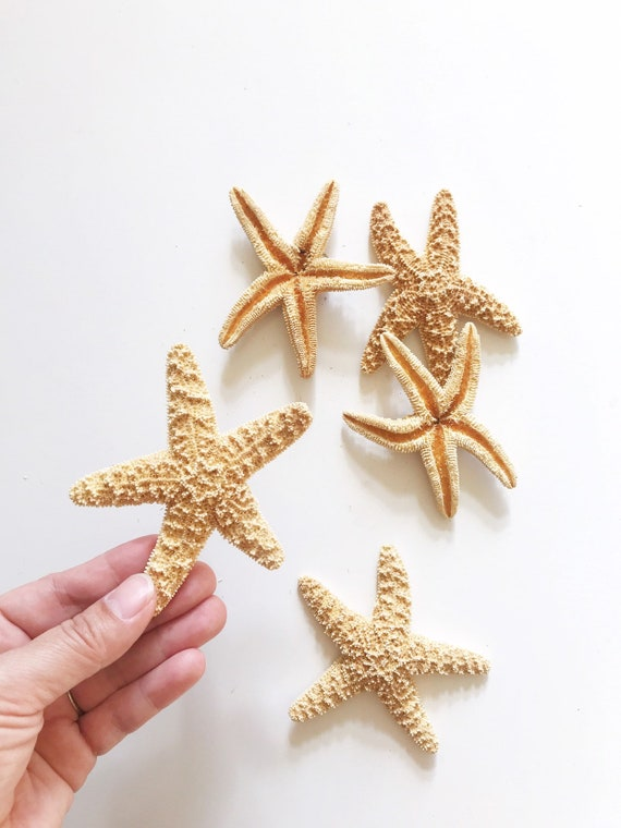 "4"" real small natural starfish / ocean beach house decor / craft supplies"