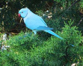 Nature Photography - Pretty Blue Bird