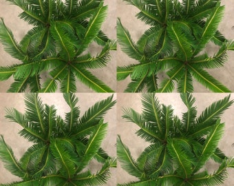 Sago Palm Bonsai Etsy