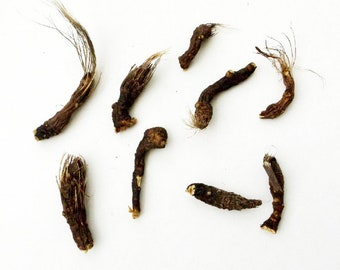 Osha Root - 9 pc lot, Bear Medicine, Medicine Bag, Traditional Herb, Herbal Magick, Divination