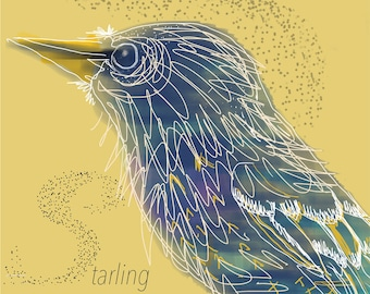 Starling Card - Murmuration - Blank Card