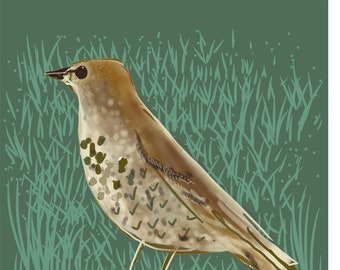 Thrush Card - Mistle Thrush - Song Thrush - Garden Birds Blank Card