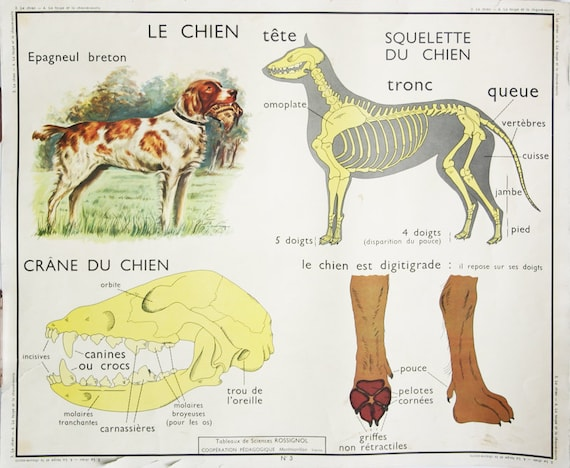 Dog Anatomy Poster Bat Mole Poster Double Sided French Etsy