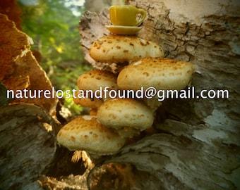 Mushroom Tea.