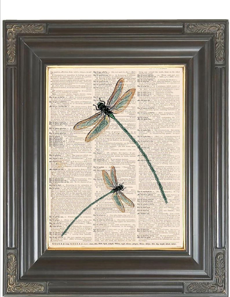 Damselfly And Dragonfly Art Print Home Decor Wall Art Poster C