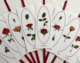 Prensado De Flores 24 Flores de Encaje Rojo ideal para elaboración de Tarjetas /& Artesanía Floral