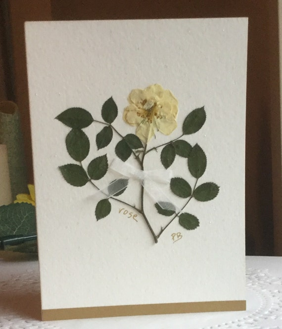 White Rose Sympathy Card Pressed Flower Greeting Card Message Inside Card For Framing