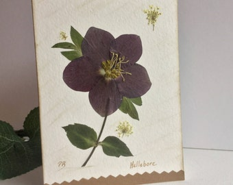 Hellebore Flower Card, Pressed Flower Art, Brown Lenton Rose, Helleborus Plant, Sympathy Card, Birthday Card, Housewarming Card