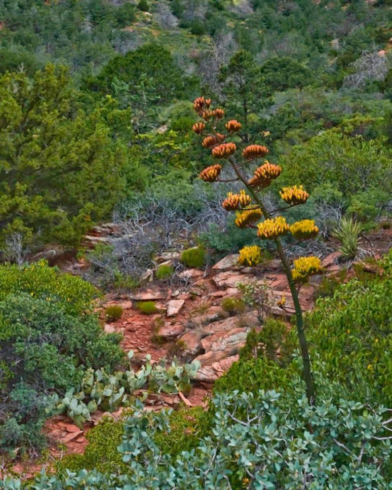 Sedona  Botanical  Power of One  Landscape Photography  image 0