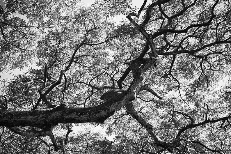 Forest art  Treehouse 3  Nature Photo  Hawaii  Fine art image 0