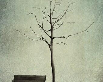 Under the cherry tree - Winter - Art print (3 different sizes)