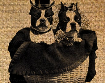 Boston Terrier Bride and Groom Dog Puppy Wedding Dogs Digital Image Download Transfer To Pillows Tote Tea Towels Burlap No. 2493