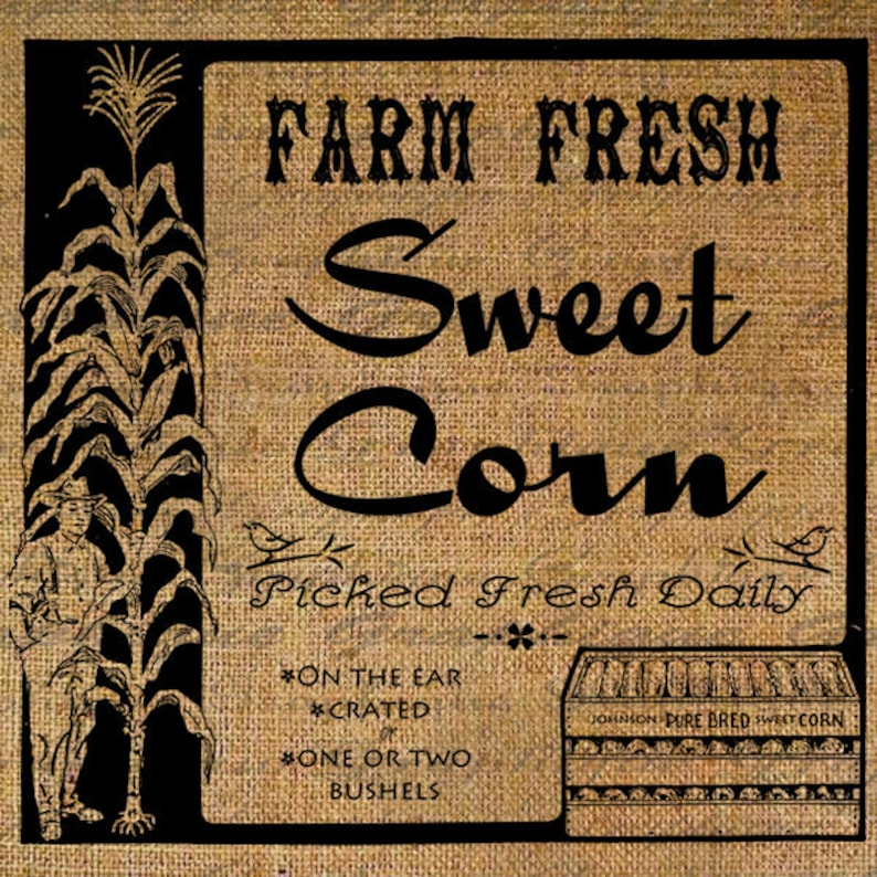 Sweet Corn Vegetable Farm Farming Vintage Sign Digital Image Download  Transfers To Pillows Totes Tea Towels Burlap No  2564