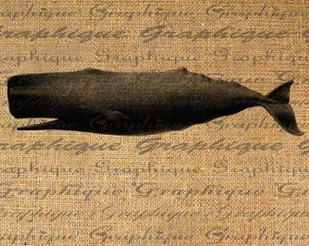 Sperm Whale Marine Life Sea Life Ocean Digital Image Download Transfer To Pillows Totes Tea Towels Burlap No. 2034