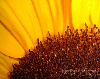 Sunflower Blank Note cards-6 pack