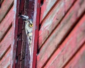 Eye See You  12x18 Fine Art Photo