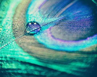 Still life Photography Peacock feather and water drop Macro Fine Art Photography Still Life Blue Green Wall Art Peacock Art Photo