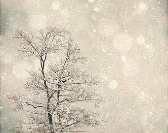 Nature Photography Winter Art: First Snow Fine Art Photography Snow Bokeh, Tree Wall Art, Nature Wall Art, Nature Photography White Grey art