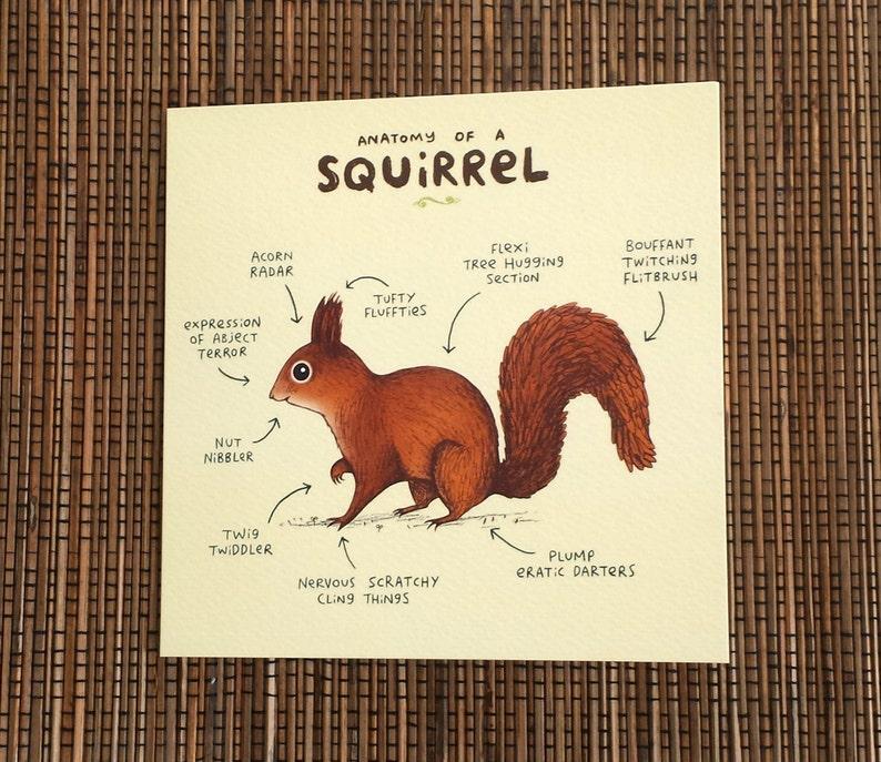 Schaum der Eichhörnchen Dating-Beratung