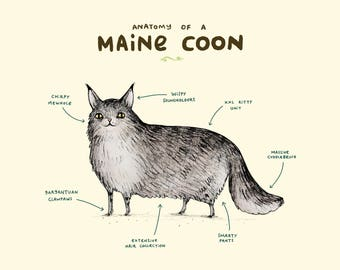 Anatomy Of A Maine Coon A4 Signed Print